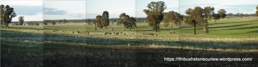 Koonda Hills agricultural landscape, northern slopes.