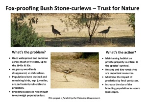 Bush Stone-curlew Poster page 1
