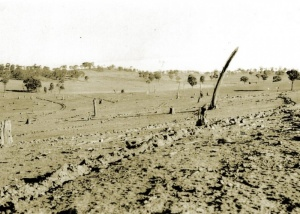 Koonda Hills landscape (Gowangardie) 1954 (Laws Collection, violettown.org.au)